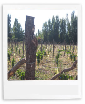 Uco Vineyards