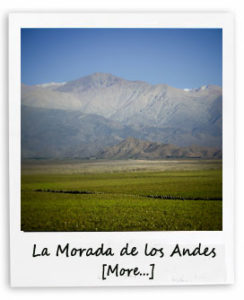 La Morada Vineyard in Mendoza