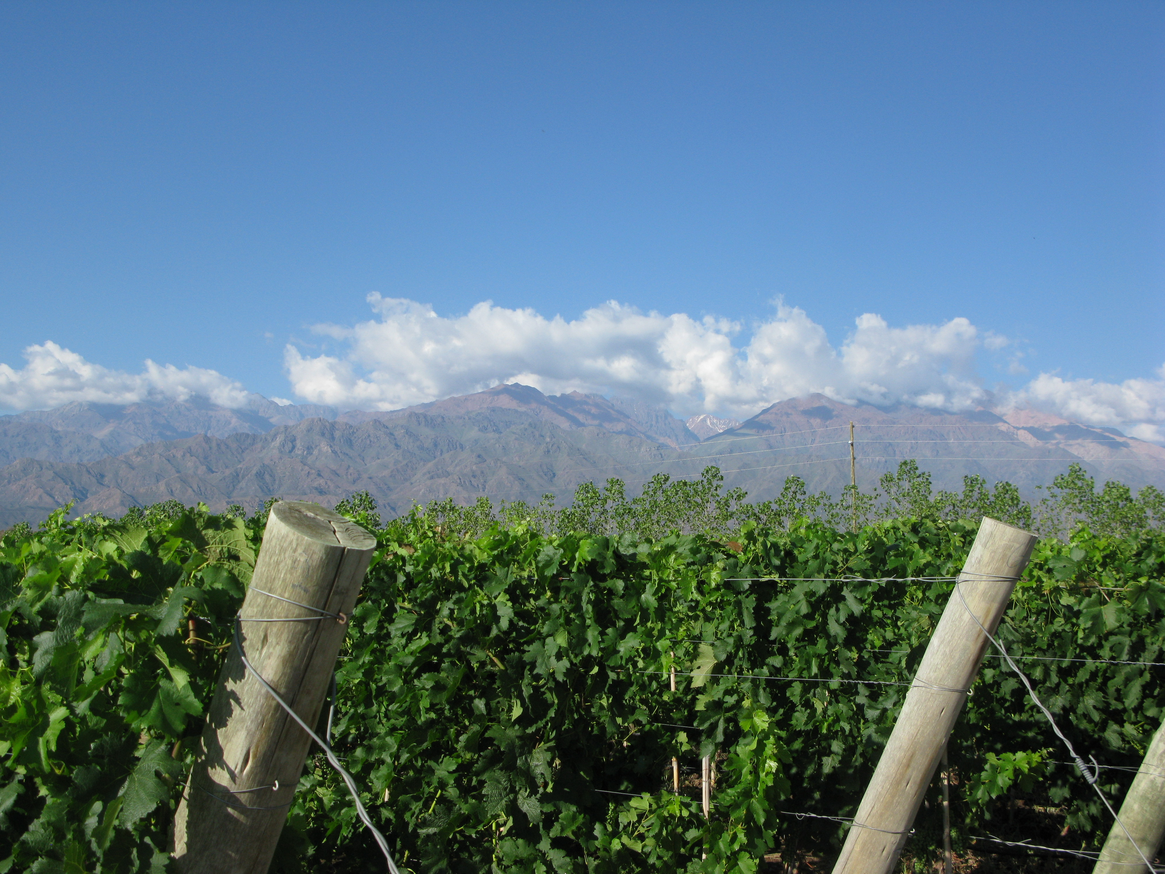 Mendoza Vineyards for sale