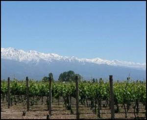 Vineyards in Agustina