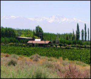 Makia Wine Estate Vineyard