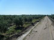 New Price - 16 Has Olive Farm Maipú
