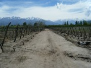 6 Ha (14.8 Acres), Premium Vineyards, Vista Flores, Tunuyán