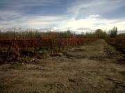 28.5 Acres (11.5 Ha) Malbec Vineyard in Tupungato, Uco Valley