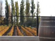 MENDOZA BOUTIQUE WINERY WITH VINEYARD IN PRIME LOCATION