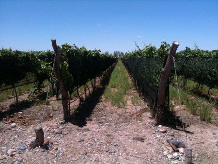 Vineyards, Wineries For Sale Argentina | BBI Argentina
