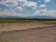 20 Has (49 Acres) of trellised vines in Lujan de Cuyo, Mendoza