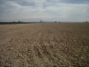 65 Has (160 Acres) of leveled land in Lujan de Cuyo, Mendoza