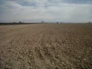 65 Has (160 Acres) of leveled land in Lujan de Cuyo, Mendoza