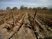 Malbec vineyard, 9 Ha, with mountain views in Tupungato, Uco Valley.